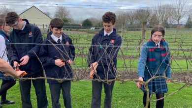 Photo of Wine-making a passion project for St Peter's Cambridge Year 10-12 students
